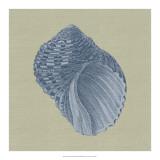 Chambray Shells III Giclee Print