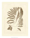 Sepia Ferns II Giclee Print
