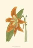 Lily Varieties II Kunstdrucke von Samuel Curtis