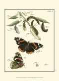 Butterfly Metamorphosis IV Affiches