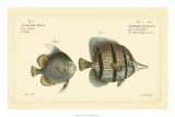 Antique Fish III Giclee Print by Marcus Elieser Bloch