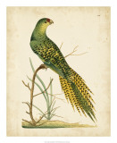 Nodder Tropical Bird IV Giclee Print by Frederick P. Nodder