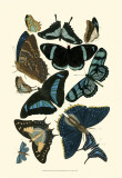 Blue Butterfly Study Posters