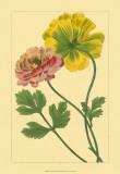 Ranunculus I Art