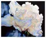 Summer&#39;s Peony Prints by Hanna Lore Koehler