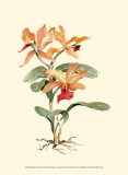 Orange Orchid Prints by Joy Waldman
