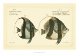 Antique Fish I Giclee Print by Marcus Elieser Bloch