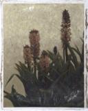 Pineapple Plant I Impression giclée par Chariklia Zarris