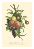 Plentiful Fruits I Giclee Print by Jean Louis Prevost