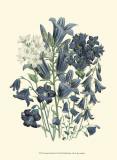 Loudon Florals III Prints by Jane W. Loudon