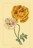 Ranunculus II Posters