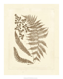 Sepia Ferns III Giclee Print