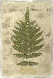 Fern Fresco IV Giclee Print by Edward Lowe