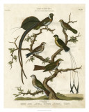 Ornithology I Giclee Print by Sydenham Teast Edwards