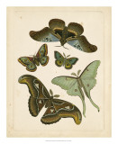 Antique Entomology II Giclee Print