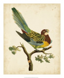 Nodder Tropical Bird II Giclee Print by Frederick P. Nodder