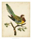 Nodder Tropical Bird II Prints by Frederick P. Nodder