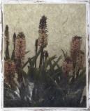 Pineapple Plant II Giclee Print by Chariklia Zarris