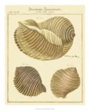 Antique Martini Shells I Giclee Print by W. Martini