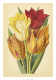 Tulip Array II Prints