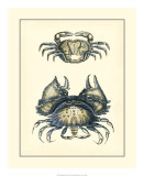 Antique Blue Crabs I Giclee Print
