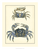 Antique Blue Crabs II Poster
