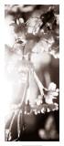 Blossom Triptych III Giclee Print by Renee Stramel