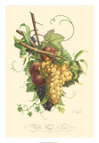 Plentiful Fruits II Giclee Print by Jean Louis Prevost
