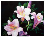 Summer's Lilies Prints by Hanna Lore Koehler