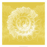 Chromatic Rosette IV Giclee Print