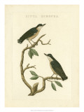 Nozeman Birds VI Giclee Print by  Nozeman