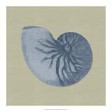 Chambray Shells II Giclee Print