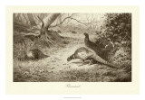 Pheasant Giclee Print by A. Thorburn