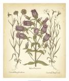 Tinted Besler Botanical II Giclee Print by Besler Basilius
