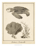 Sea Turtle Study II Prints