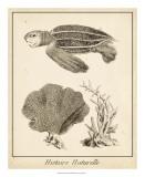 Sea Turtle Study II Giclee Print