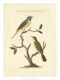 Nozeman Birds III Giclee Print by  Nozeman