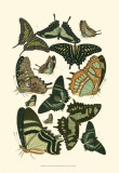 Green Butterfly Study Posters