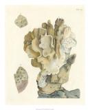 Antique Coral IV Giclée-tryk