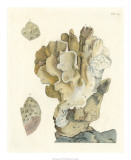 Antique Coral IV Giclee Print