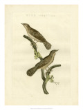 Nozeman Birds V Giclee Print by  Nozeman