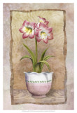 Spring Amaryllis Prints by Abby White