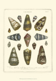 Conchology Collection IV Prints by Albertus Seba