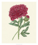 Summer Blush II Giclee Print by Edwin Dalton Smith