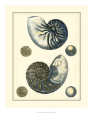 Antique Blue Nautilus Giclee Print