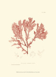 Nature Print in Coral IV Poster