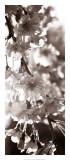 Blossom Triptych II Giclee Print by Renee Stramel