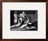 Bryan the St. Bernard Dog Enjoys a Pint, February 1956 Framed Photographic Print