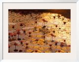 Lotus Pond Art by Bruno Baumann