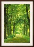 Camino de bosque Lámina por Hein Van Den Heuvel